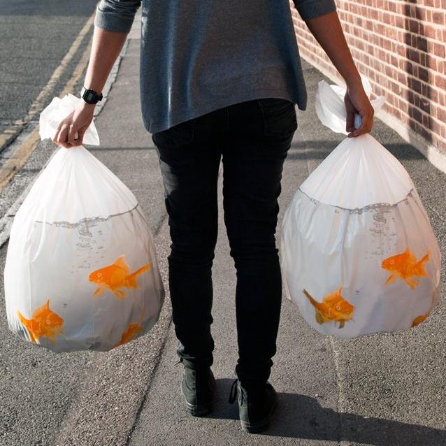 金魚がプリントされたおしゃれなゴミ袋