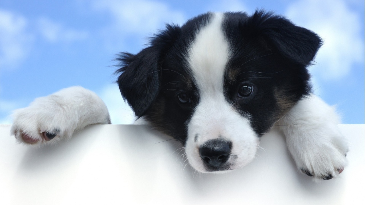 心理学者が調査した知性が高い犬ランキング